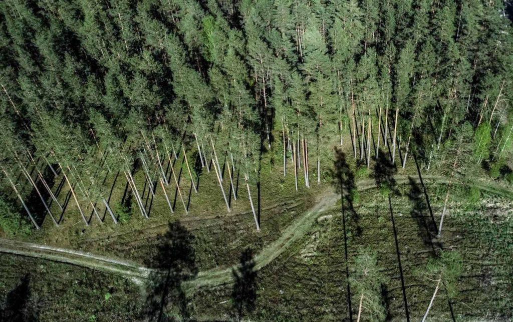 Miškų priežiūra