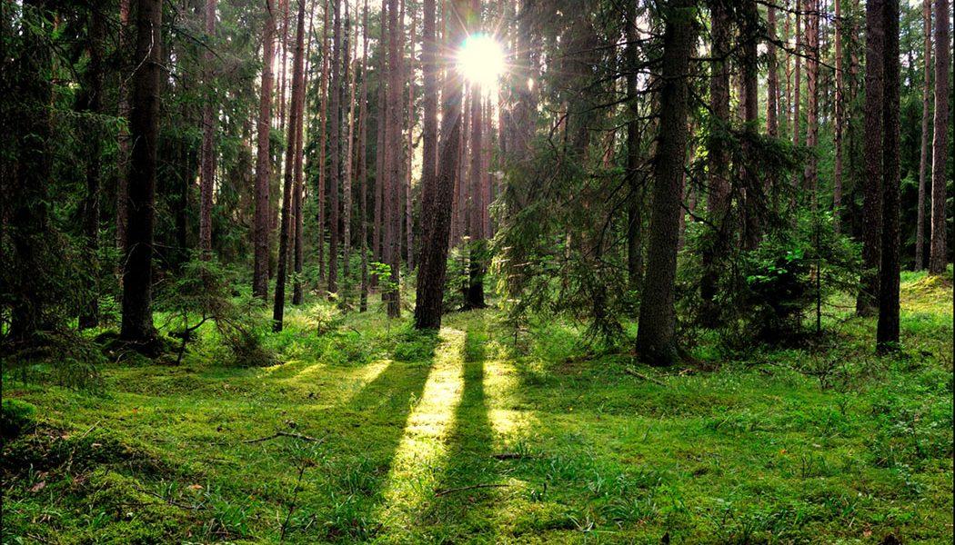 Miškų rinkos naujienos