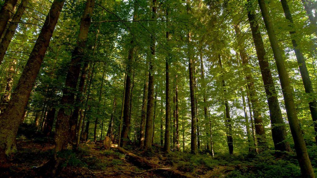 Miškų aukcionų