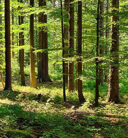 Miškų aukcionai